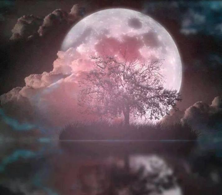 Image -Moonlight pink.jpg