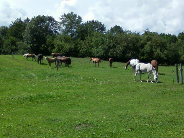 Jay grazing with herd
