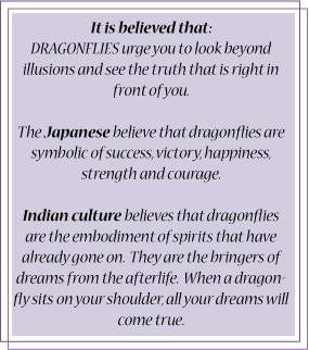 Image -dragonfly meaning
