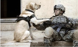 Image -Veteran & dog