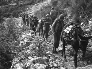 Here's a sample of the terrain over which British and American forces of the Fifth army are fighting in Italy, Jan. 15, 1944. A mule pack train, its load delivered to the men at the front, winds its way down a steep trail homeward bound for another load. (AP Photo)