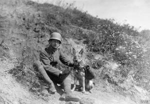 Image -Veterans dog