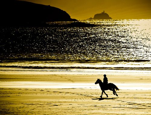 Image -horse cantering on beach #2