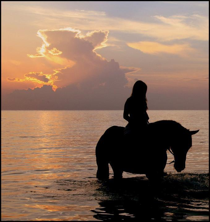 image -horse in water with sunset