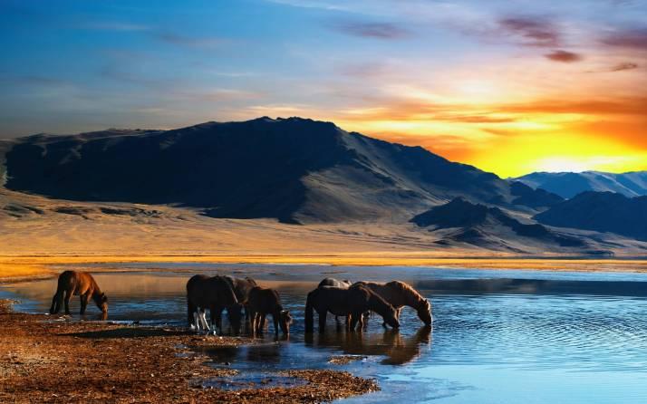 Image -wild horses
