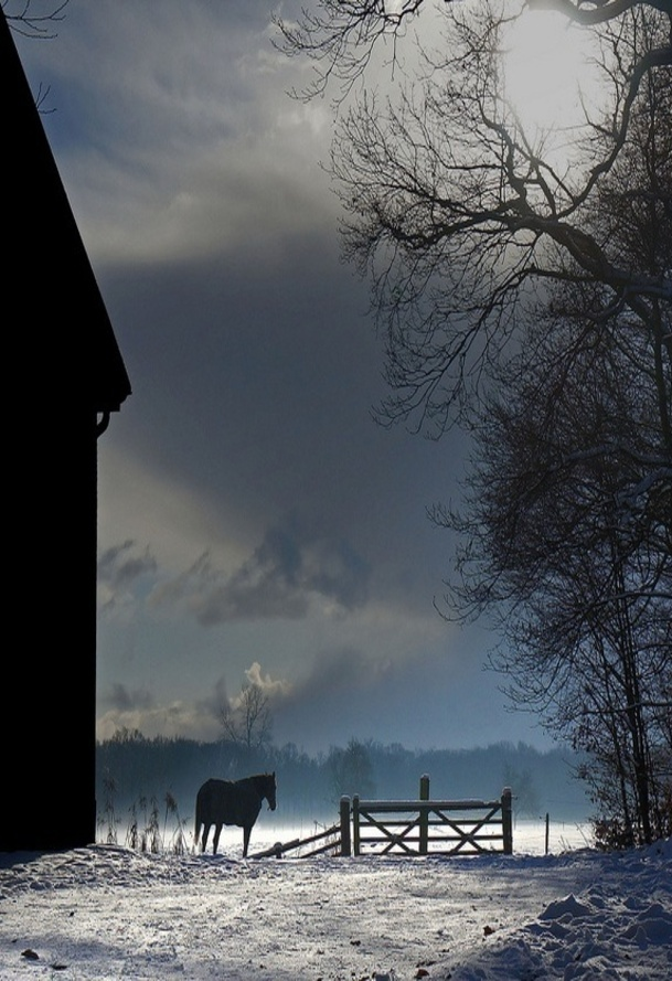 Image -barn with horse at night