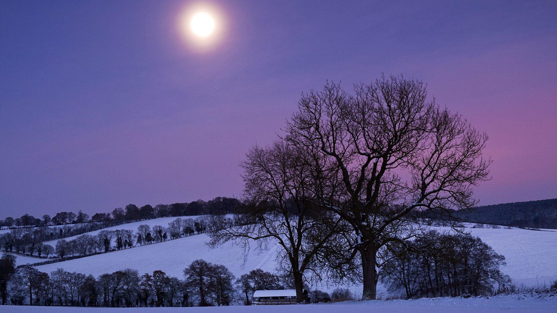 Image -moonlight in winter